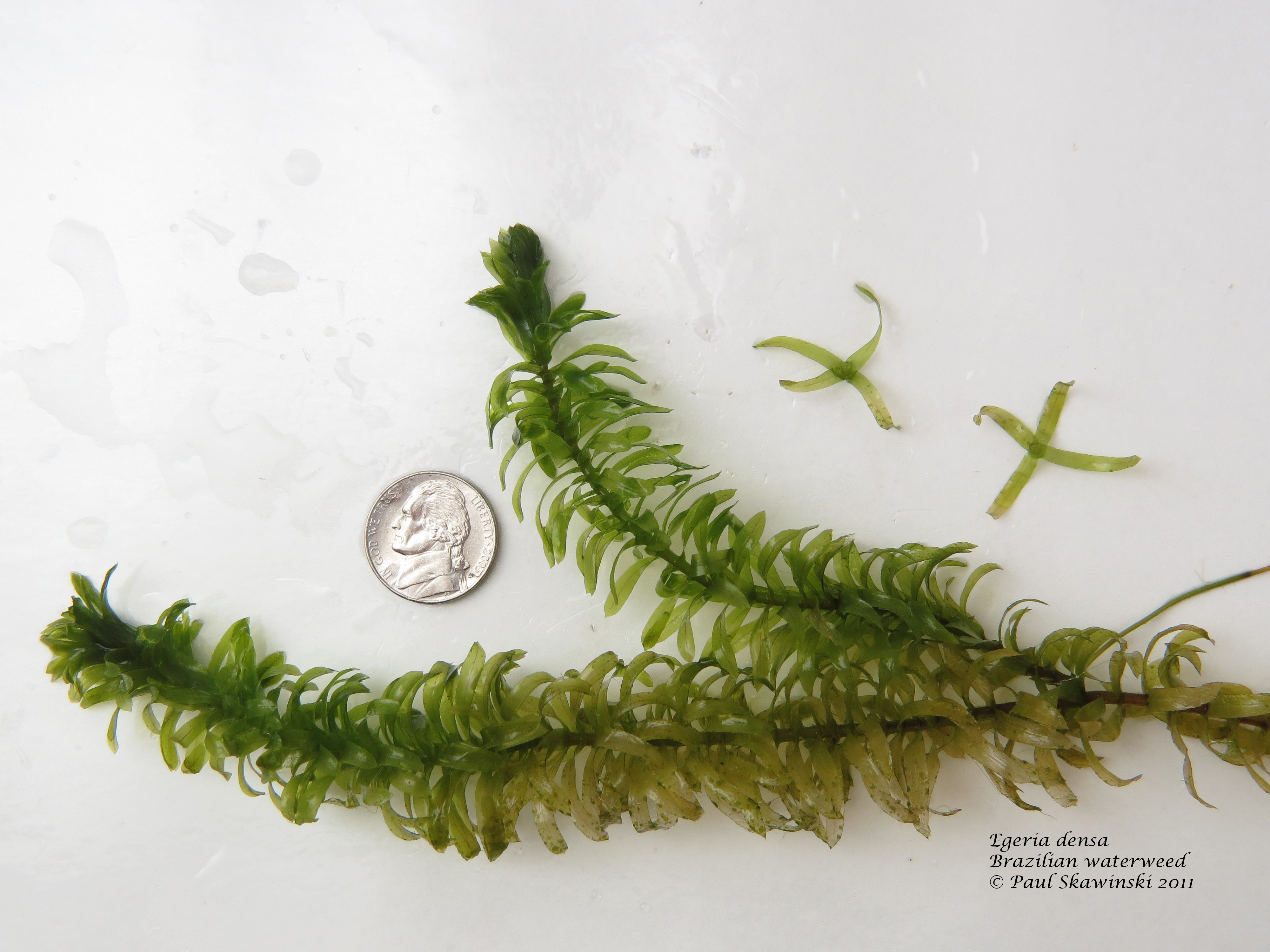 UW-Extension Lakes Aquatic Plant ID Training – June 27th, 28th, or 29th, 2017