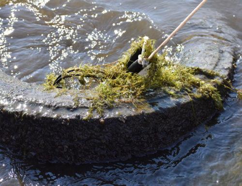 Aquatic Invasive Snapshot Day was a Success!