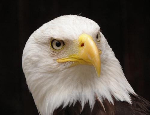 FWWA's Eagle Day Presentations Highlight the Aquatic Side of Eagle Habitat