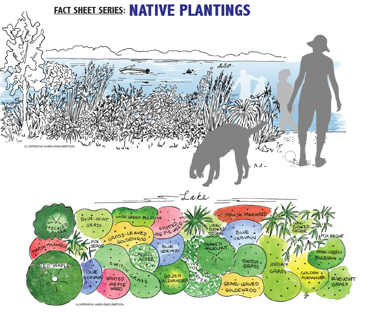 Shoreline Restoration and you » Fox-Wolf Watershed Alliance